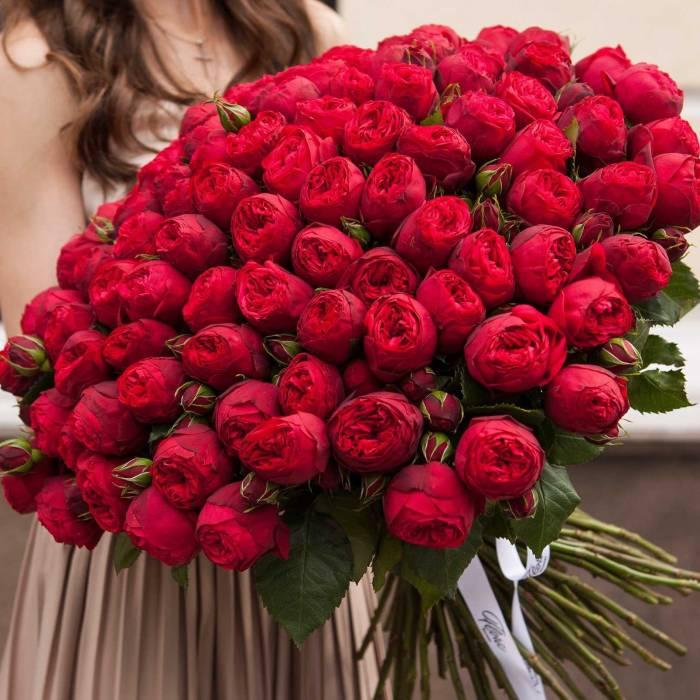 Красные пионовидные розы R110